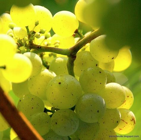 Wein in Irland