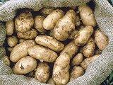Irland TV-Tipp, Kartoffeln