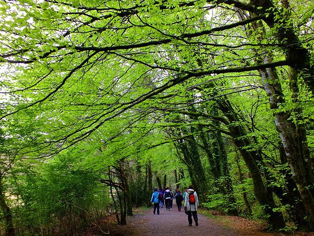 Hier wandern wir: Glengarriff Nature Reserve