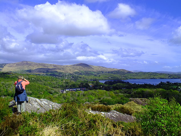 Hier wandern wir: Lady Bantry's Lookout im Glengarriff Nature Reserve