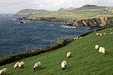 Irland TV-Tipp, Insel der Kontraste