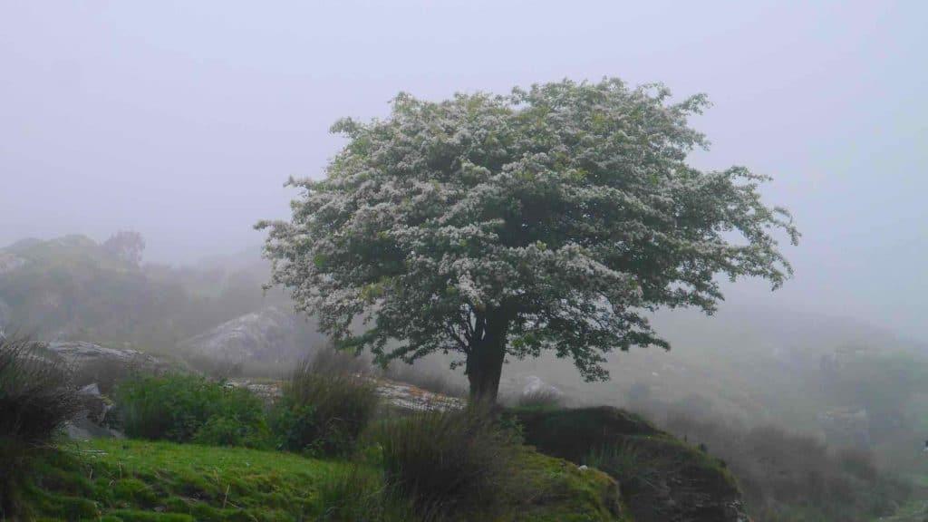 Bäume Irlands