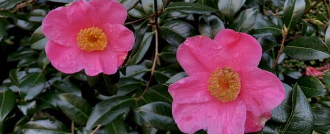 Irland Wandern Blüten