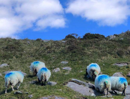 Irlands Farben: Blue Sky oder Schäfchen-Wolken