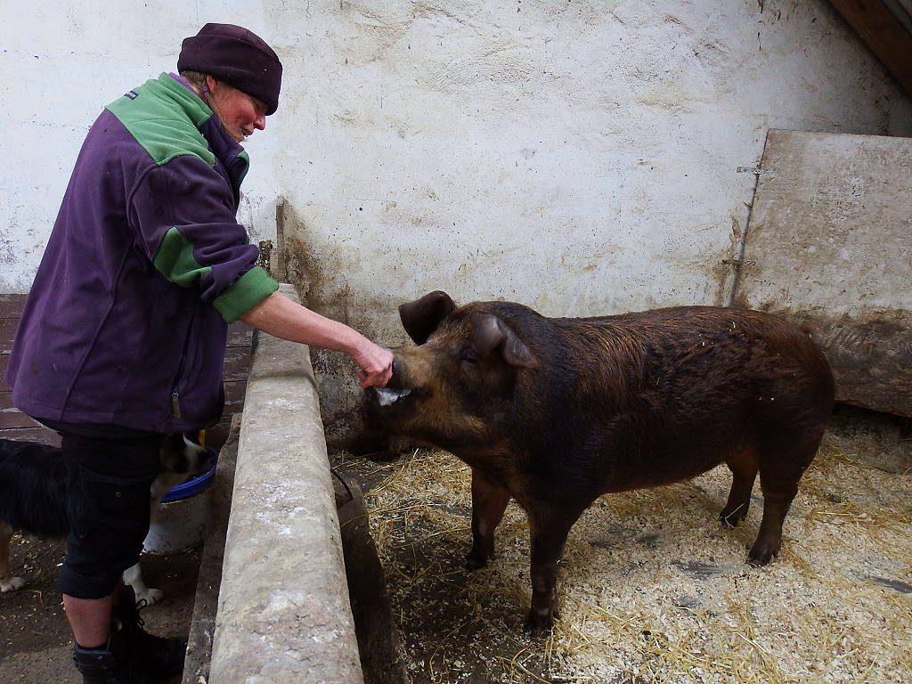 Yvon und Schwein Brownie