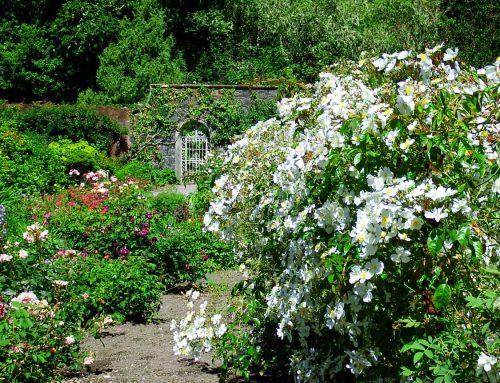 Die neuen Wanderlust-Ferien 2020: Gartenreisen
