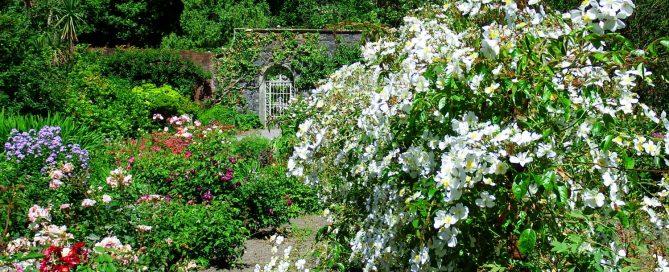 Gartenreisen Wanderlust Irland - Garinish Island