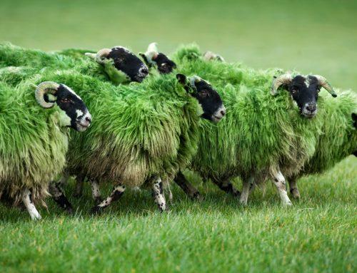 """Patrick´s Day: Vom Glück, ein Tag lang """"irisch"""" zu sein"""