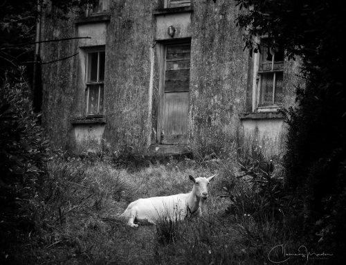 Irland in Schwarz-Weiß: Verlassene Orte