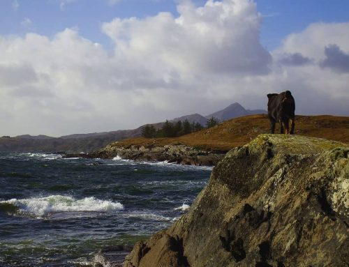 Bantry Bay: Wellen, Wind und Meer