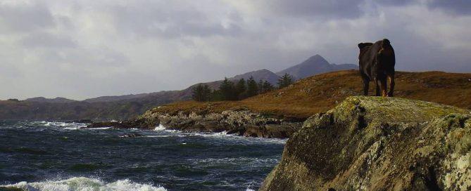 Irlandnews - Bantry Bay Ausblick mit Hund