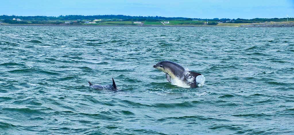 Irlandnews Irland TV-Tipp - Shannon Dolphins