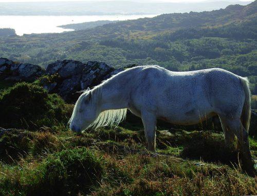 Irland im TV: Weiße Pferde und wilder Westen