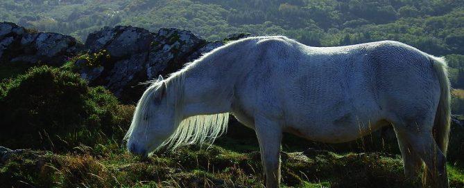 Irlandnews Irland TV-Tipp - Die Legende der weißen Pferde