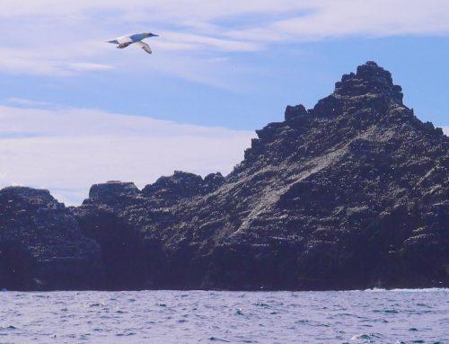 Die bunte Welt der Skelligs: Der Trend geht zum Plastik