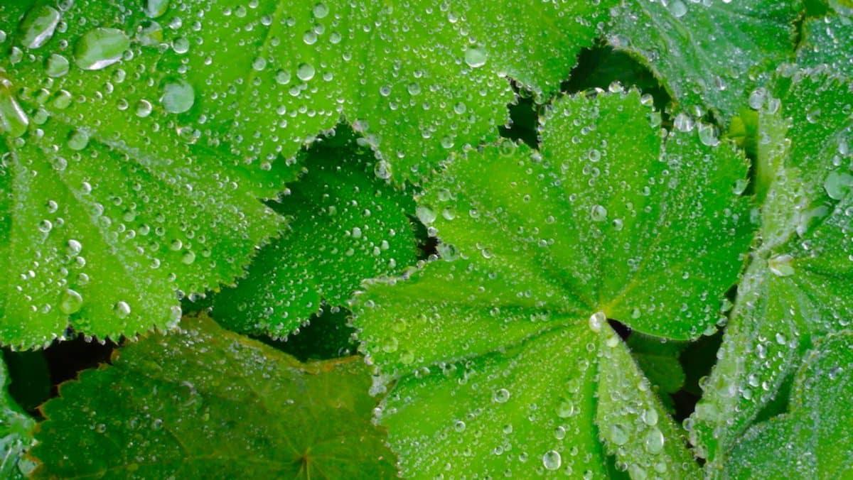 Regen Irland