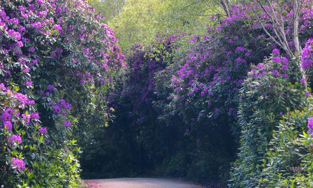 Pflanzen Irland