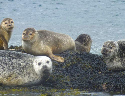 Irland – Land der faszinierenden Tiere