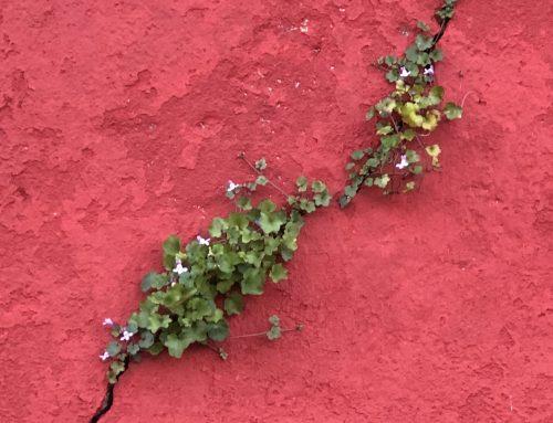 Von Ritzen und Rissen: There´s a Crack in Everything