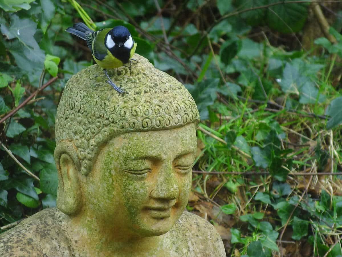 We are the Ark- Kohlmeise und Buddha